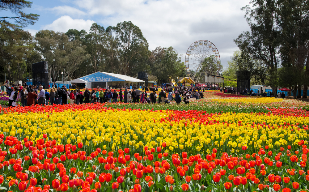 Canberra Floriade Day Tours