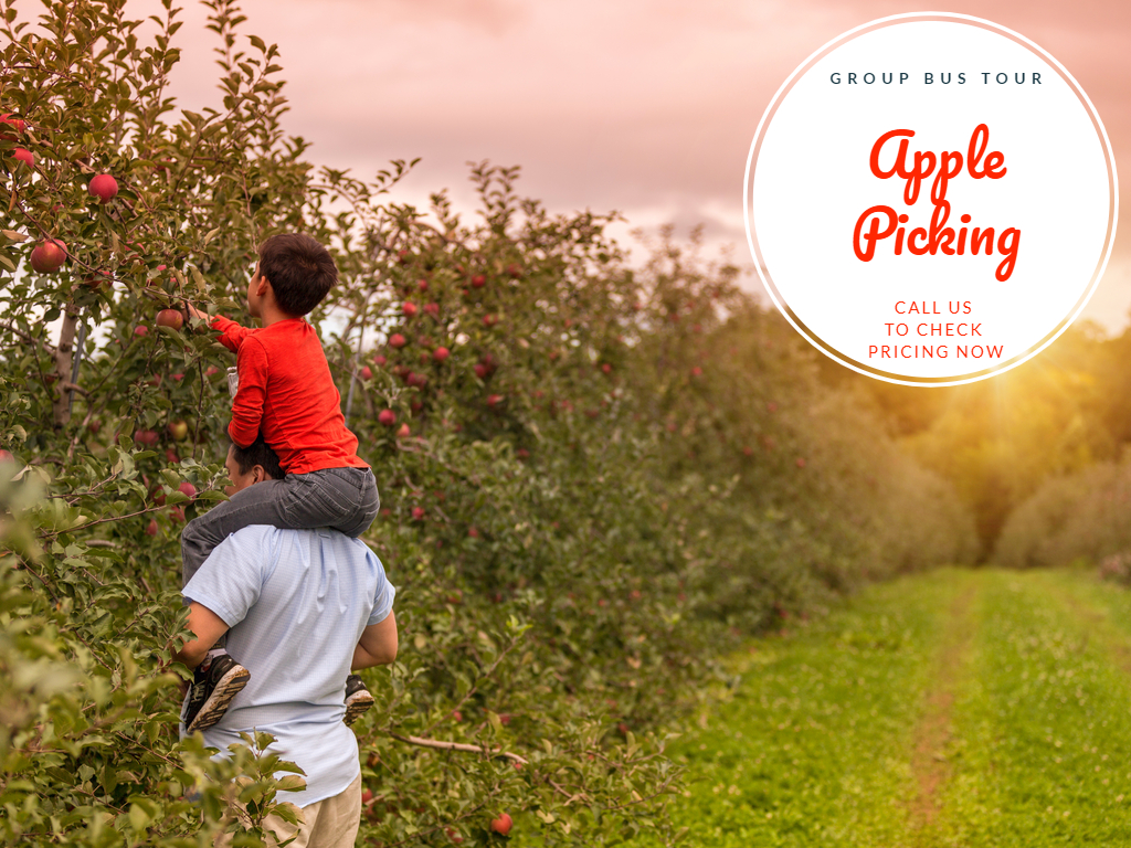 Apple Picking in May